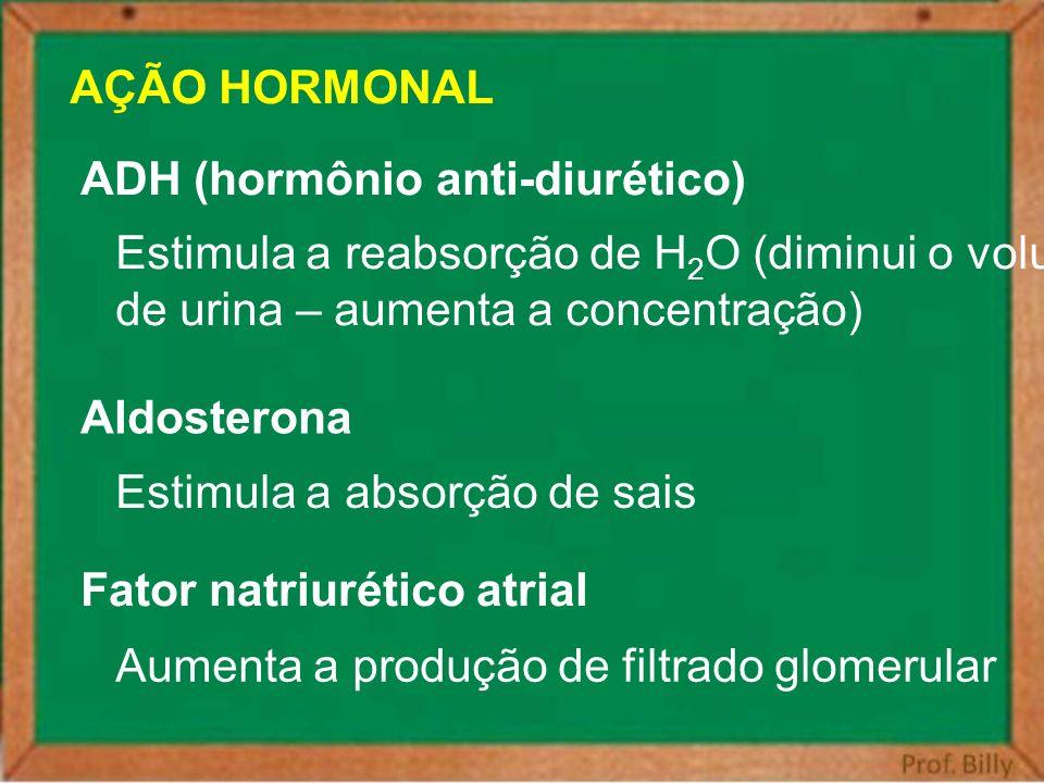 AÇÃO HORMONAL ADH (hormônio anti-diurético) Estimula a reabsorção de H 2 O (diminui o volume de urina – aumenta a concentração) Aldosterona Estimula a