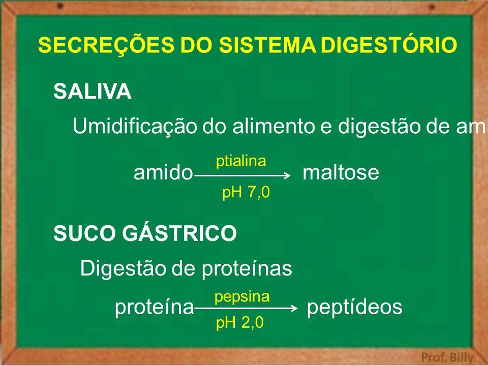 SECREÇÕES DO SISTEMA DIGESTÓRIO SALIVA Umidificação do alimento e digestão de amido amidomaltose ptialina pH 7,0 SUCO GÁSTRICO Digestão de proteínas p