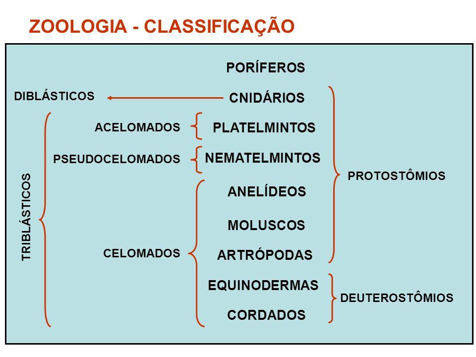 ZOOLOGIA - CLASSIFICAÇÃO PORÍFEROS CNIDÁRIOS PLATELMINTOS NEMATELMINTOS ANELÍDEOS MOLUSCOS ARTRÓPODAS EQUINODERMAS CORDADOS PROTOSTÔMIOS DEUTEROSTÔMIOS CELOMADOS PSEUDOCELOMADOS ACELOMADOS DIBLÁSTICOS TRIBLÁSTICOS