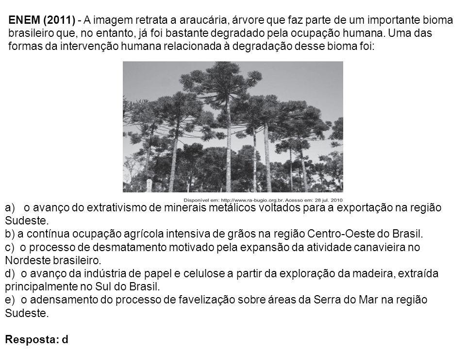 ENEM (2011) - A imagem retrata a araucária, árvore que faz parte de um importante bioma brasileiro que, no entanto, já foi bastante degradado pela ocu
