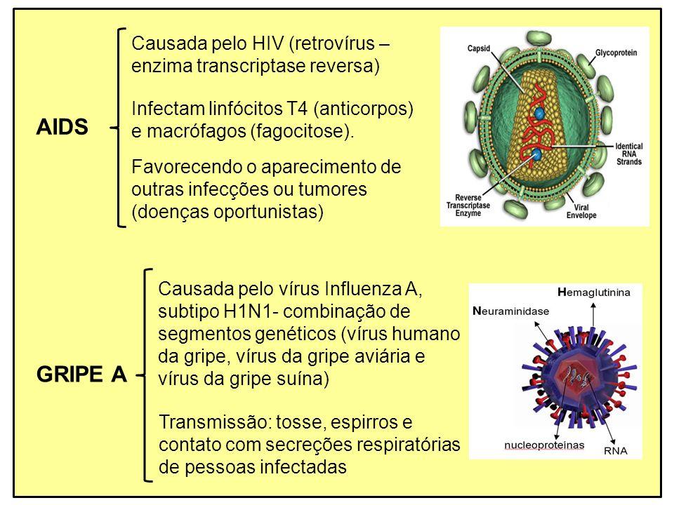 AIDS Causada pelo HIV (retrovírus – enzima transcriptase reversa) Favorecendo o aparecimento de outras infecções ou tumores (doenças oportunistas) Inf