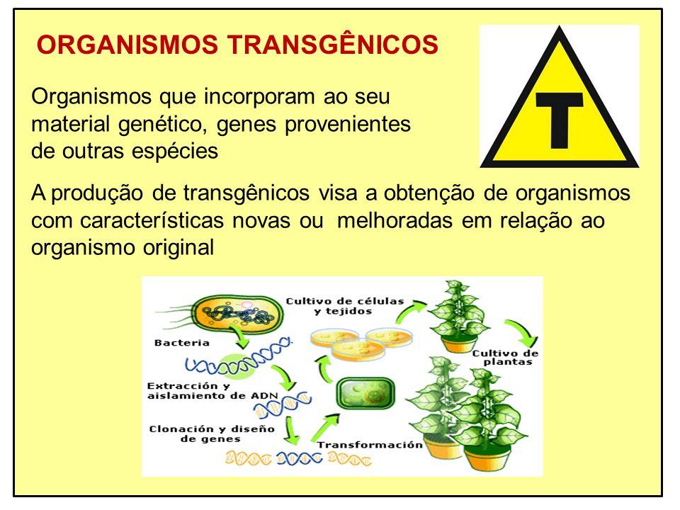 ORGANISMOS TRANSGÊNICOS Organismos que incorporam ao seu material genético, genes provenientes de outras espécies A produção de transgênicos visa a ob