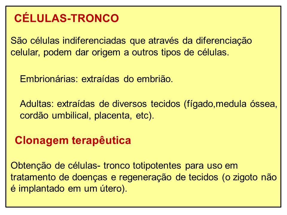 CÉLULAS-TRONCO São células indiferenciadas que através da diferenciação celular, podem dar origem a outros tipos de células. Embrionárias: extraídas d
