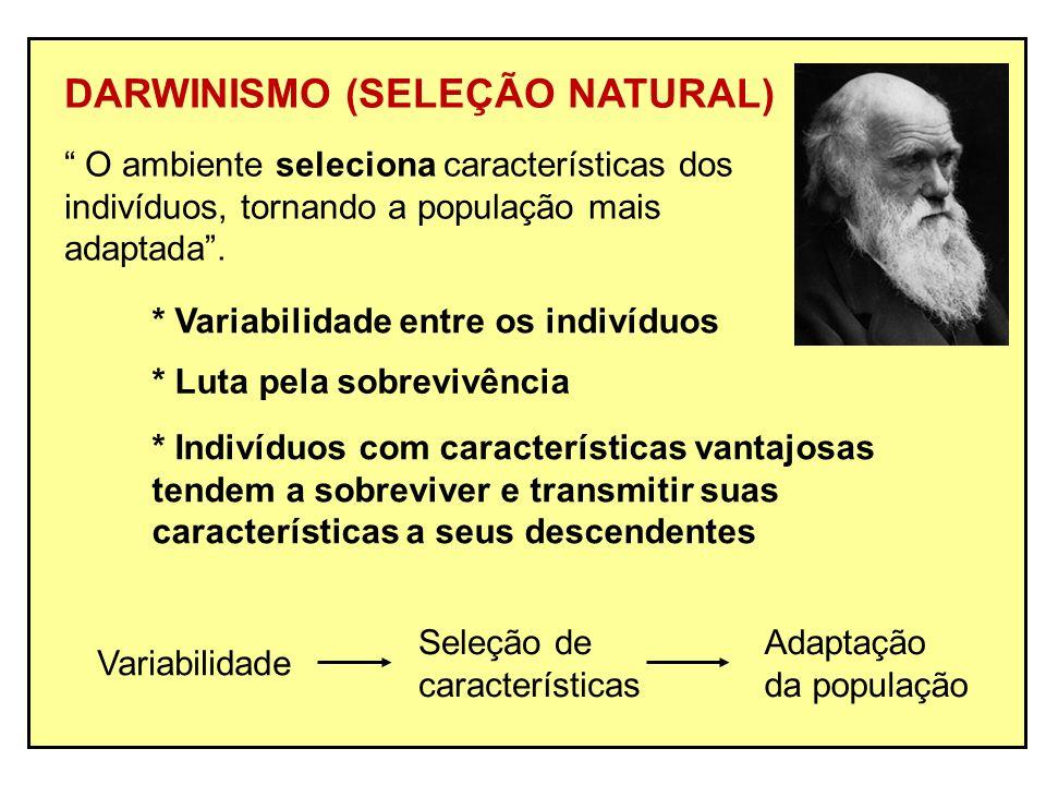 DARWINISMO (SELEÇÃO NATURAL) O ambiente seleciona características dos indivíduos, tornando a população mais adaptada. * Variabilidade entre os indivíd