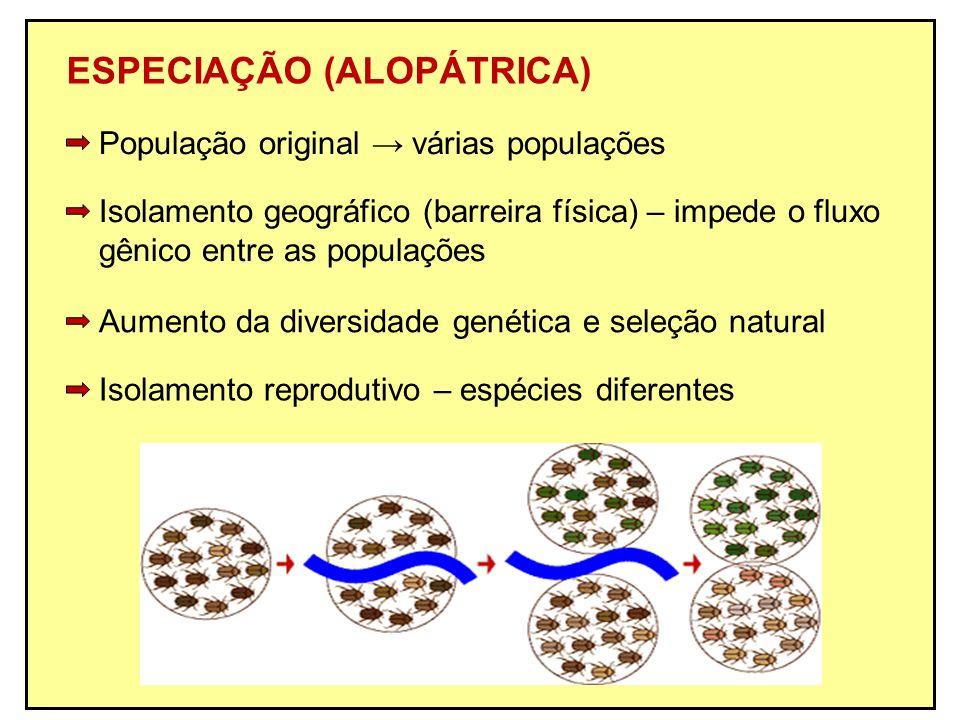 ESPECIAÇÃO (ALOPÁTRICA) Isolamento geográfico (barreira física) – impede o fluxo gênico entre as populações Isolamento reprodutivo – espécies diferent