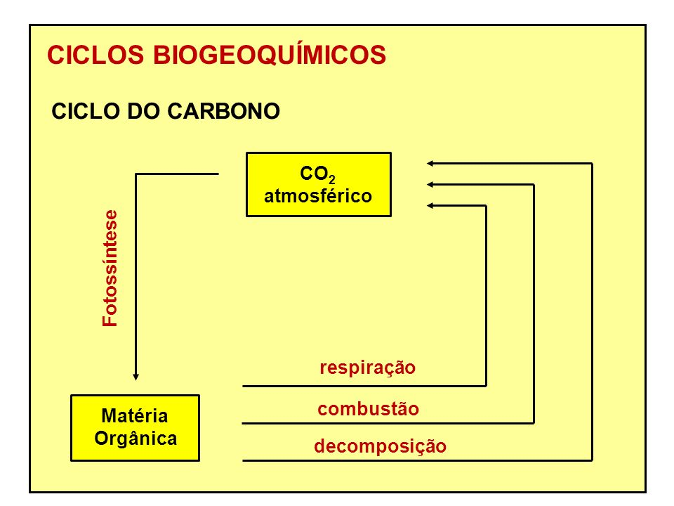 CICLOS BIOGEOQUÍMICOS CO 2 atmosférico Matéria Orgânica Fotossíntese respiração combustão decomposição CICLO DO CARBONO