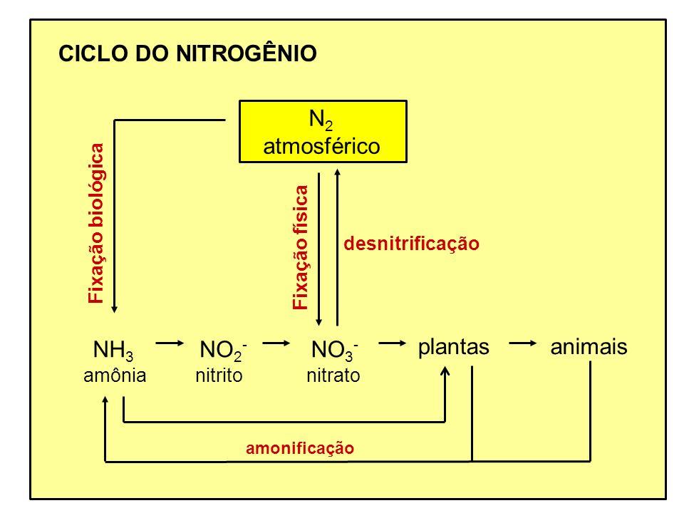 CICLO DO NITROGÊNIO N 2 atmosférico nitrito NO 2 - nitrato NO 3 - plantasanimais desnitrificação amônia NH 3 Fixação biológica Fixação física amonific