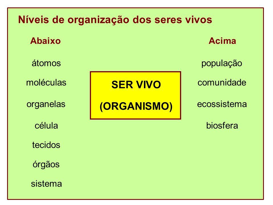 A - Níveis abaixo de organismo Átomos – unidade da matéria Ex: hidrogênio, carbono, oxigênio, ferro, iodo...