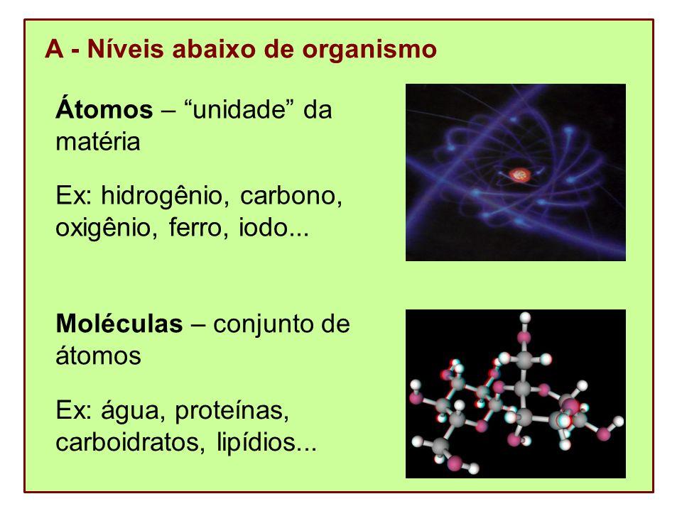 Organelas – conjunto de moléculas Ex: ribossomos, plastos, mitocôndrias...