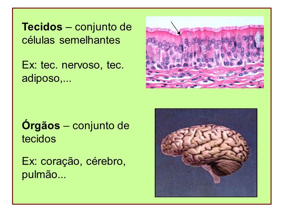 Sistemas – conjunto de órgãos Ex: sist.digestório, sist.