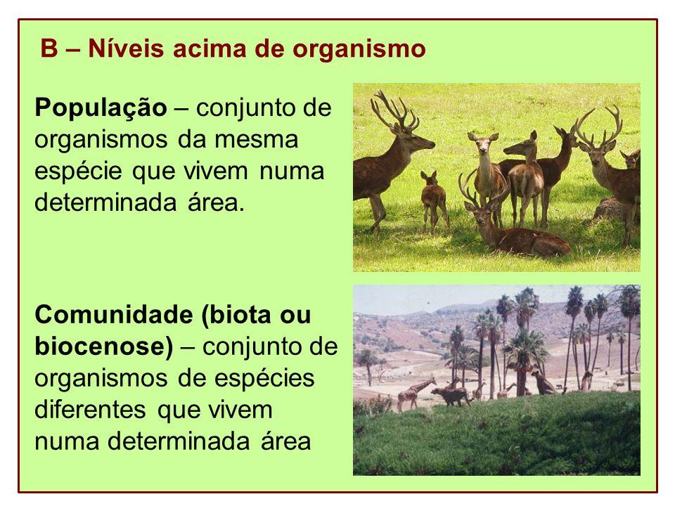 Ecossistema – conjunto formado pelo meio físico (biótopo) e a comunidade que com o meio se relaciona Floresta amazônicaPantanal