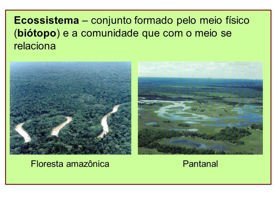 Biosfera – conjunto de todos os ecossistemas *Os níveis acima de organismo são objetos de estudo da Ecologia.
