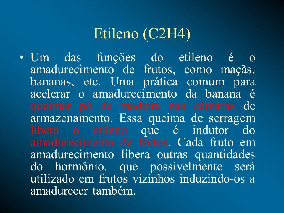 Etileno Provoca a maturação dos frutos; Floração( Inicia a floração em abacaxi). Provoca abscisão das folhas e frutos. Provoca gancho apical em estiol