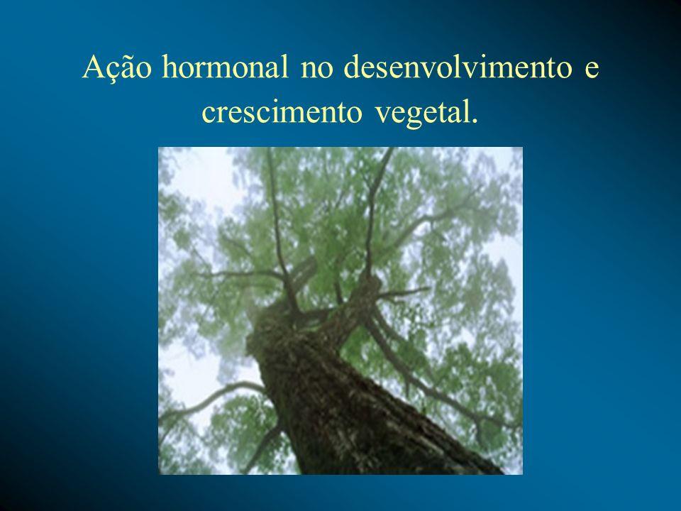 Ação hormonal na abscisão foliar.