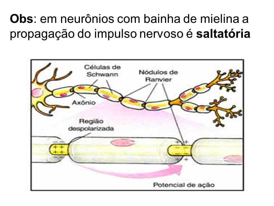 Obs: em neurônios com bainha de mielina a propagação do impulso nervoso é saltatória