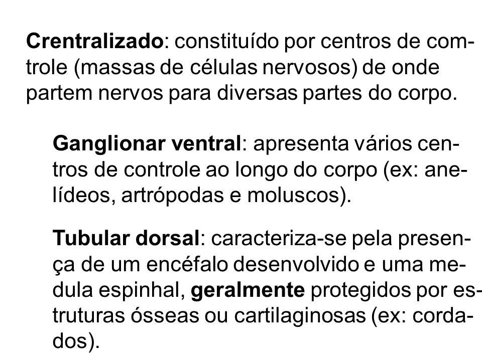 Crentralizado: constituído por centros de com- trole (massas de células nervosos) de onde partem nervos para diversas partes do corpo. Ganglionar vent