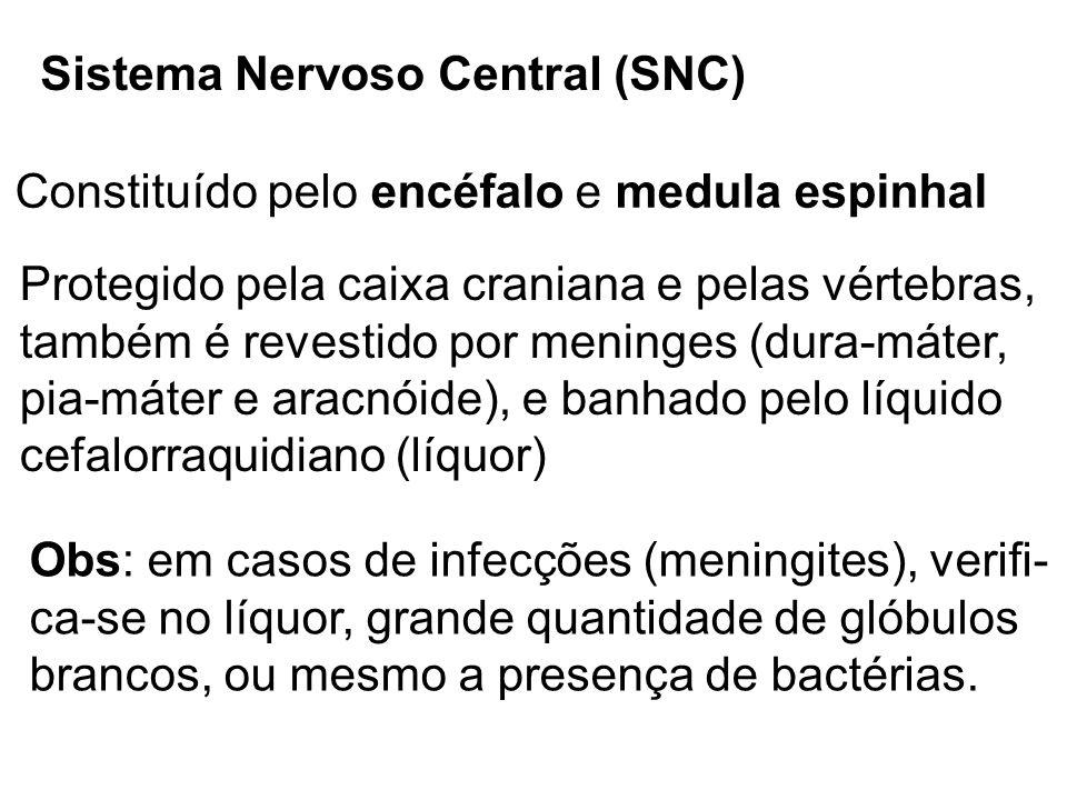 Sistema Nervoso Central (SNC) Protegido pela caixa craniana e pelas vértebras, também é revestido por meninges (dura-máter, pia-máter e aracnóide), e
