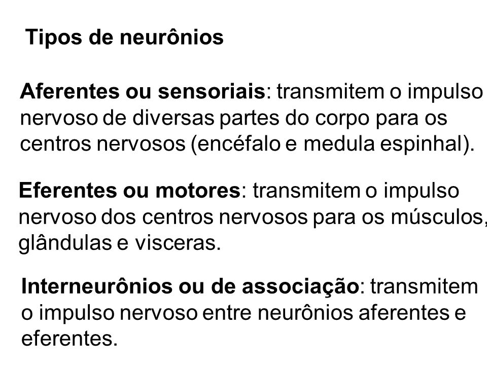 Tipos de neurônios Aferentes ou sensoriais: transmitem o impulso nervoso de diversas partes do corpo para os centros nervosos (encéfalo e medula espin