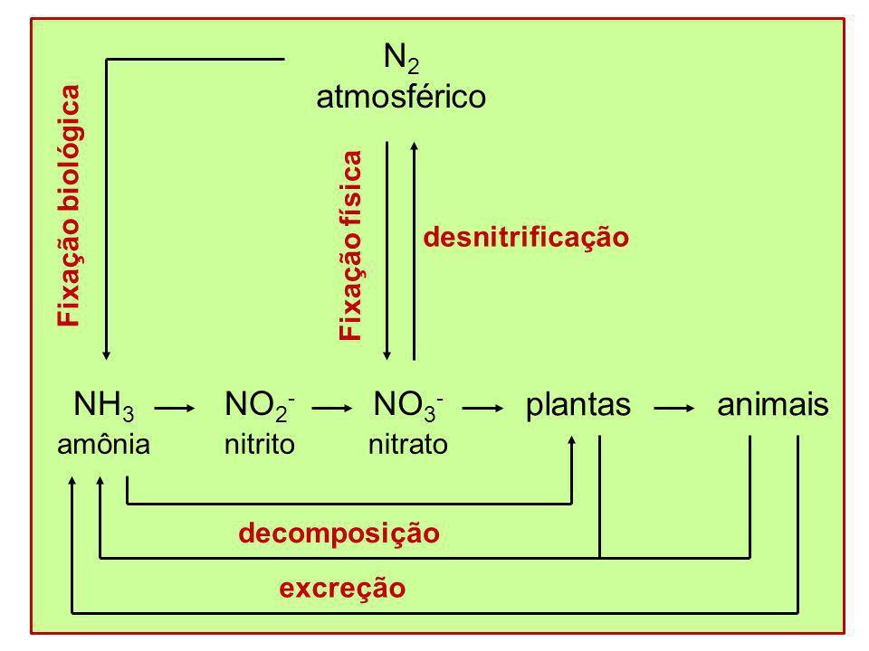 N 2 atmosférico nitrito NO 2 - nitrato NO 3 - animais decomposição excreção desnitrificação amônia NH 3 Fixação biológica Fixação física plantas