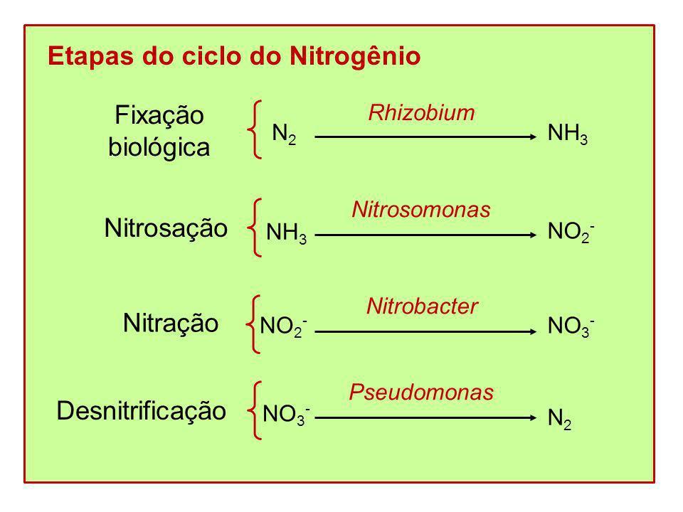 Etapas do ciclo do Nitrogênio Fixação biológica N2N2 NH 3 Rhizobium Nitrosação Nitração Desnitrificação NH 3 NO 2 - Nitrosomonas NO 2 - Nitrobacter NO