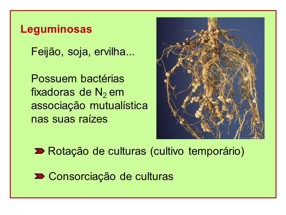 Leguminosas Feijão, soja, ervilha... Possuem bactérias fixadoras de N 2 em associação mutualística nas suas raízes Rotação de culturas (cultivo tempor