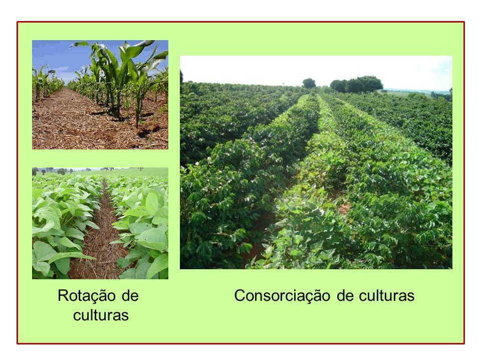 Rotação de culturas Consorciação de culturas
