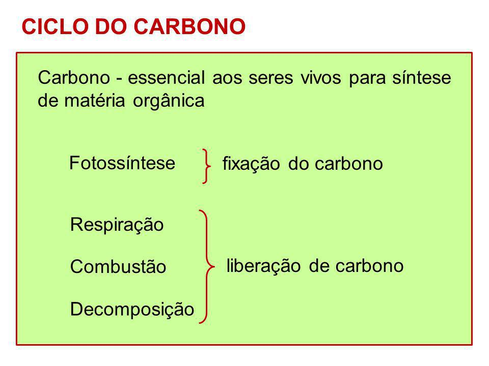 Carbono - essencial aos seres vivos para síntese de matéria orgânica CICLO DO CARBONO Respiração Combustão Decomposição liberação de carbono Fotossínt