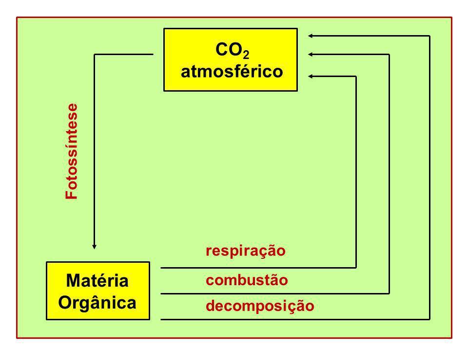 CO 2 atmosférico Matéria Orgânica Fotossíntese respiração combustão decomposição