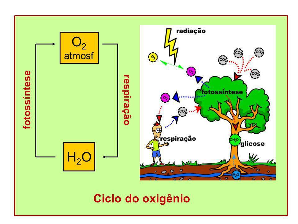 Ciclo do oxigênio O 2 atmosf H2OH2O respiração fotossíntese