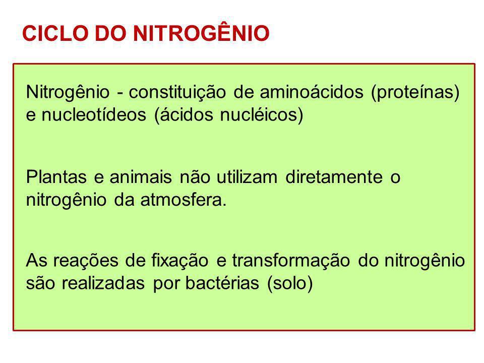 CICLO DO NITROGÊNIO Nitrogênio - constituição de aminoácidos (proteínas) e nucleotídeos (ácidos nucléicos) Plantas e animais não utilizam diretamente
