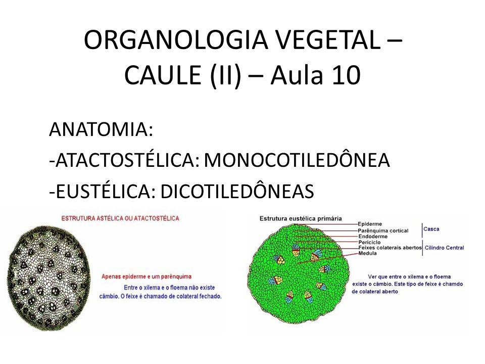 ORGANOLOGIA VEGETAL – CAULE (II) – Aula 10 ANATOMIA: -ATACTOSTÉLICA: MONOCOTILEDÔNEA -EUSTÉLICA: DICOTILEDÔNEAS