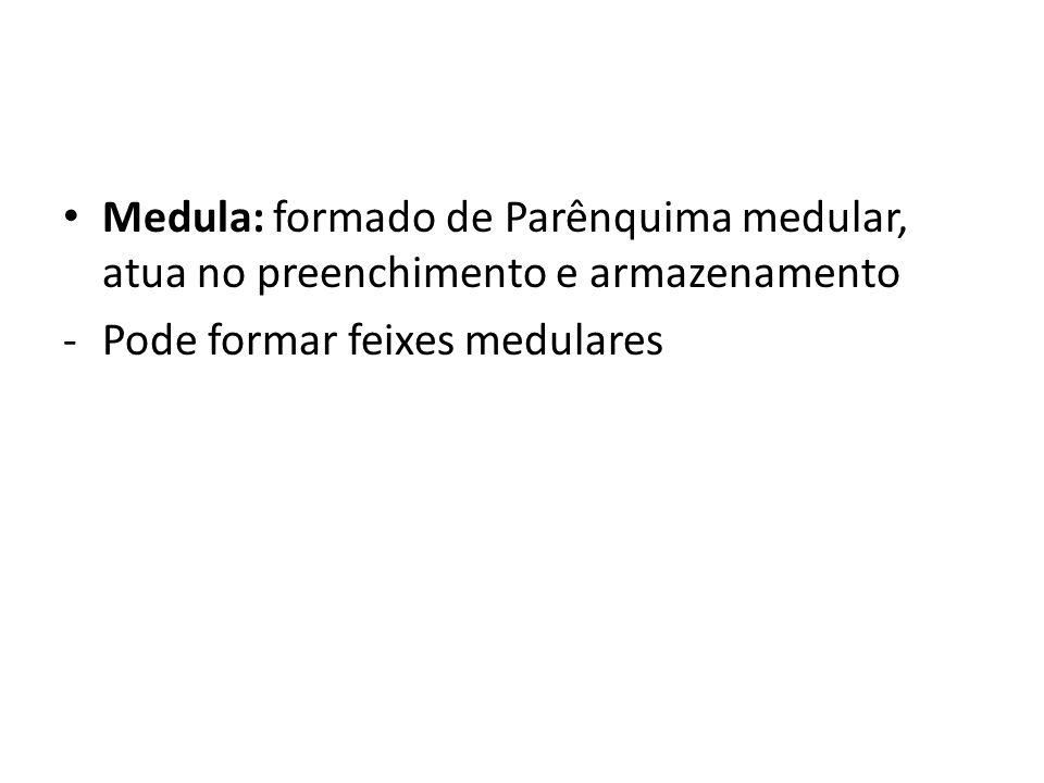 Medula: formado de Parênquima medular, atua no preenchimento e armazenamento -Pode formar feixes medulares