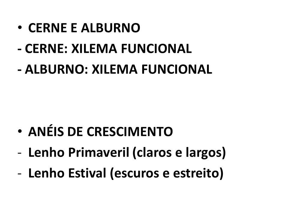 CERNE E ALBURNO - CERNE: XILEMA FUNCIONAL - ALBURNO: XILEMA FUNCIONAL ANÉIS DE CRESCIMENTO -Lenho Primaveril (claros e largos) -Lenho Estival (escuros