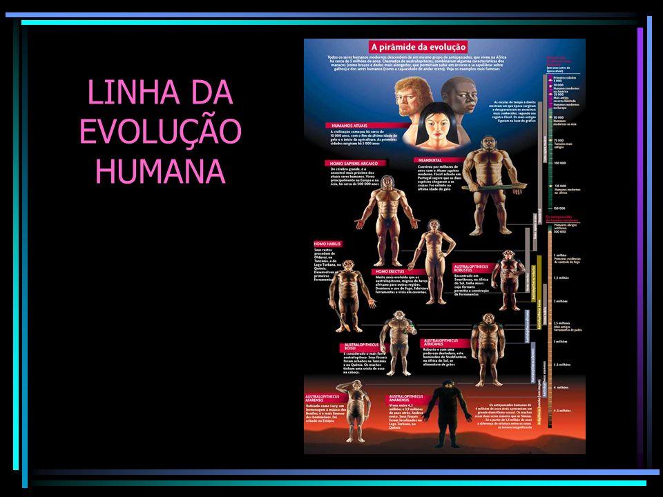 LINHA DA EVOLUÇÃO HUMANA