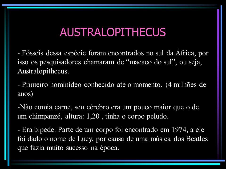 AUSTRALOPITHECUS - Fósseis dessa espécie foram encontrados no sul da África, por isso os pesquisadores chamaram de macaco do sul, ou seja, Australopit