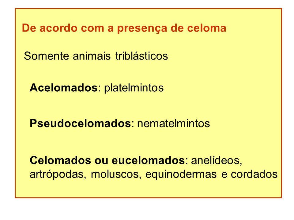 De acordo com a presença de celoma Somente animais triblásticos Acelomados: platelmintos Pseudocelomados: nematelmintos Celomados ou eucelomados: anel