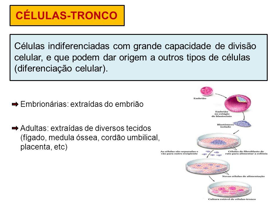 CÉLULAS-TRONCO Células indiferenciadas com grande capacidade de divisão celular, e que podem dar origem a outros tipos de células (diferenciação celul