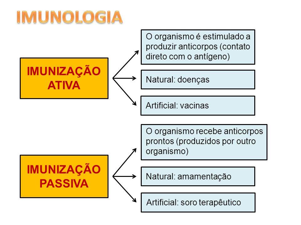 IMUNIZAÇÃO ATIVA O organismo é estimulado a produzir anticorpos (contato direto com o antígeno) IMUNIZAÇÃO PASSIVA O organismo recebe anticorpos pront