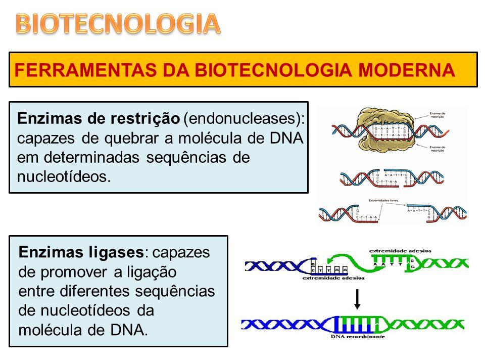 FERRAMENTAS DA BIOTECNOLOGIA MODERNA Enzimas de restrição (endonucleases): capazes de quebrar a molécula de DNA em determinadas sequências de nucleotí