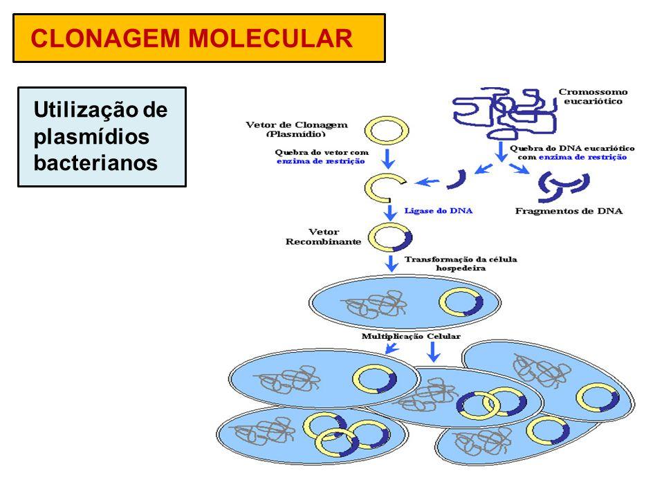 CLONAGEM MOLECULAR Utilização de plasmídios bacterianos