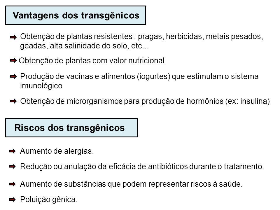 Vantagens dos transgênicos Obtenção de plantas resistentes : pragas, herbicidas, metais pesados, geadas, alta salinidade do solo, etc... Obtenção de p