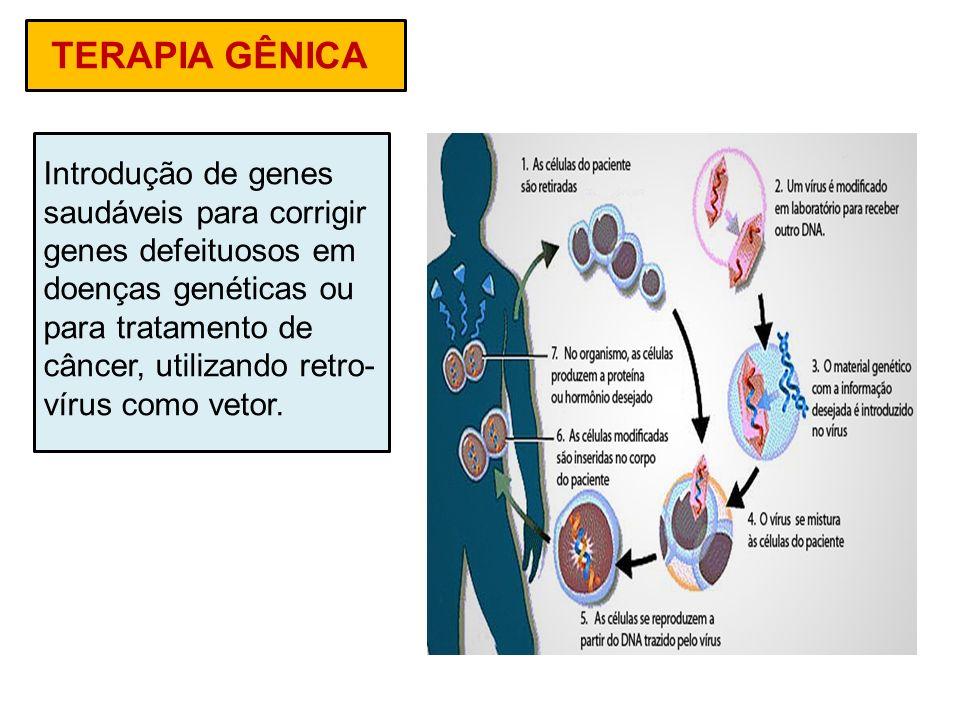 TERAPIA GÊNICA Introdução de genes saudáveis para corrigir genes defeituosos em doenças genéticas ou para tratamento de câncer, utilizando retro- víru