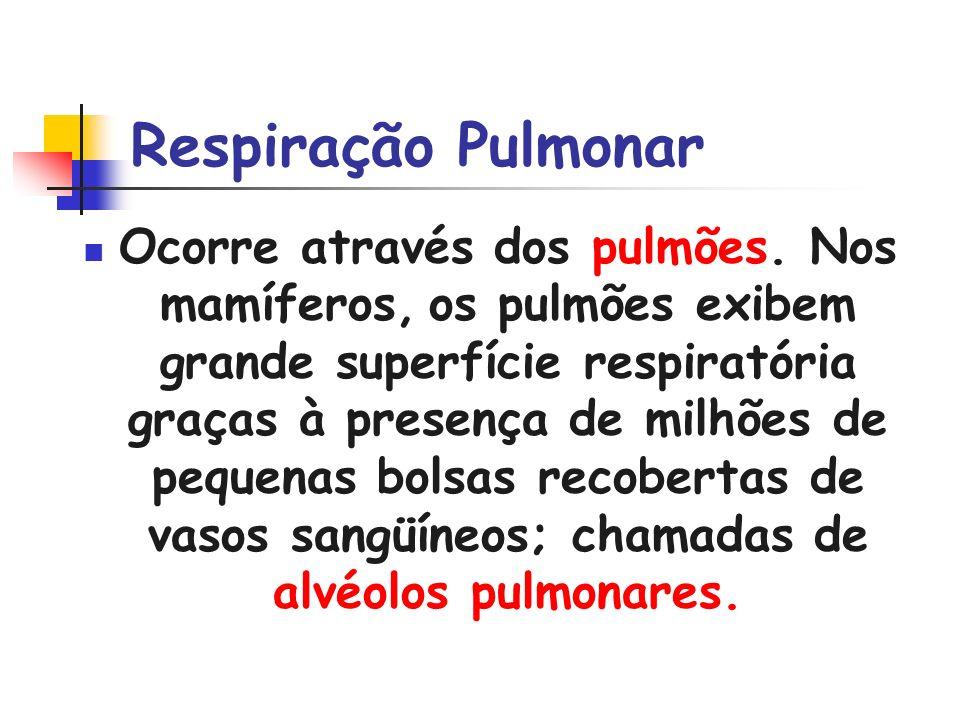 Respiração Pulmonar Ocorre através dos pulmões. Nos mamíferos, os pulmões exibem grande superfície respiratória graças à presença de milhões de pequen
