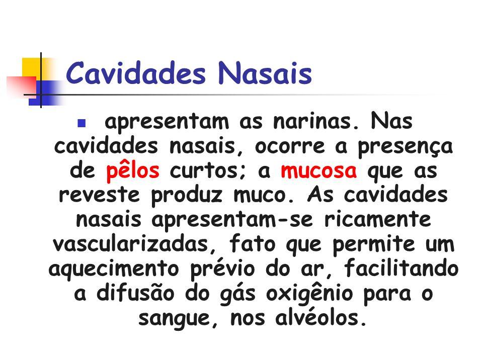 Cavidades Nasais apresentam as narinas. Nas cavidades nasais, ocorre a presença de pêlos curtos; a mucosa que as reveste produz muco. As cavidades nas