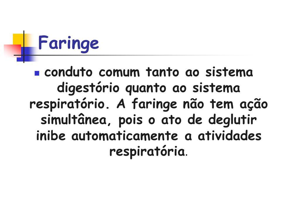 Faringe conduto comum tanto ao sistema digestório quanto ao sistema respiratório. A faringe não tem ação simultânea, pois o ato de deglutir inibe auto