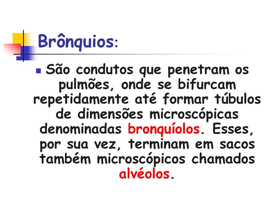 Brônquios : São condutos que penetram os pulmões, onde se bifurcam repetidamente até formar túbulos de dimensões microscópicas denominadas bronquíolos