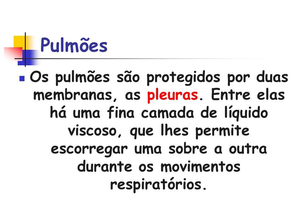 Pulmões Os pulmões são protegidos por duas membranas, as pleuras. Entre elas há uma fina camada de líquido viscoso, que lhes permite escorregar uma so