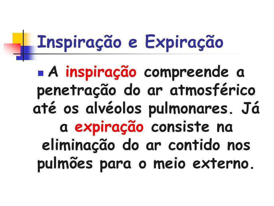 Inspiração e Expiração A inspiração compreende a penetração do ar atmosférico até os alvéolos pulmonares. Já a expiração consiste na eliminação do ar