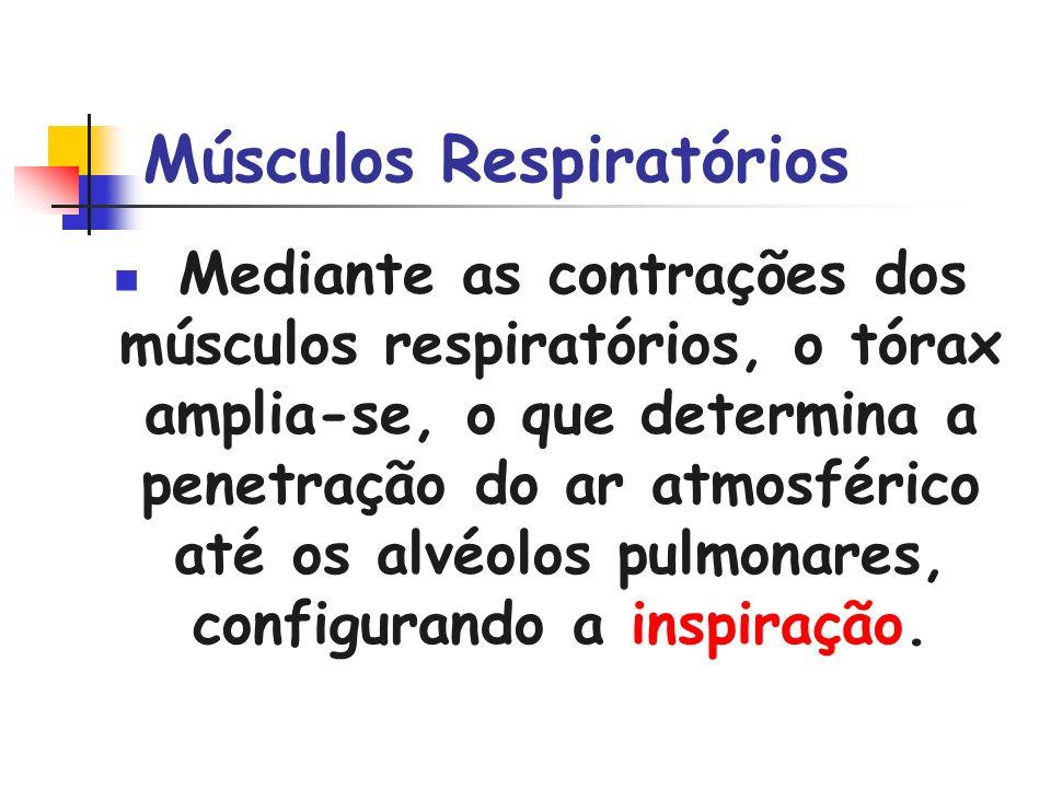 Músculos Respiratórios Mediante as contrações dos músculos respiratórios, o tórax amplia-se, o que determina a penetração do ar atmosférico até os alv