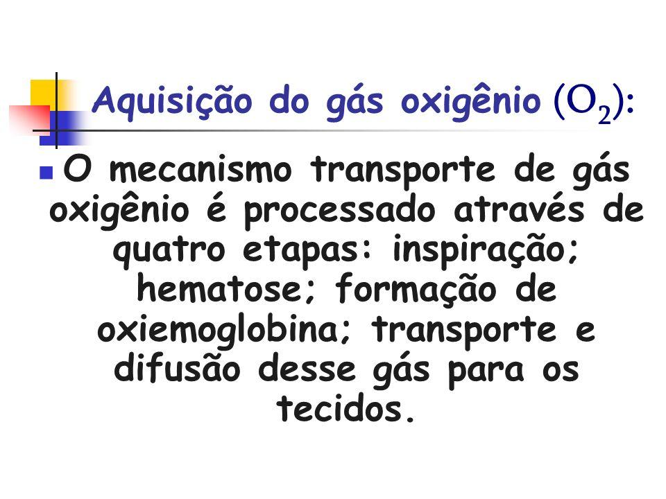 Aquisição do gás oxigênio (O 2 ): O mecanismo transporte de gás oxigênio é processado através de quatro etapas: inspiração; hematose; formação de oxie
